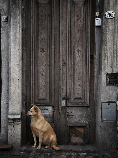 449px-dog_waiting_for_his_owners_to_come
