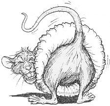 Rat's Ass